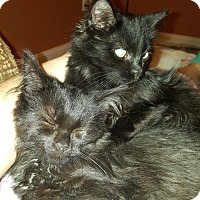 Adopt A Pet :: Willow - Richmond, MI