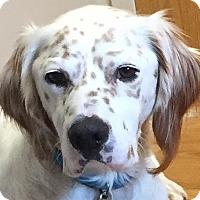 Adopt A Pet :: REECE - Pine Grove, PA