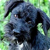 Adopt A Pet :: PIP(OUR