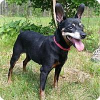 Adopt A Pet :: Little Bit - Canterbury, CT