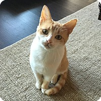 Adopt A Pet :: Eevee - Huntsville, AL