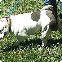 Adopt A Pet :: Josh(ua) - Carthage, NC