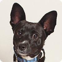 Adopt A Pet :: Clove - Walnut Creek, CA