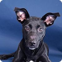 Adopt A Pet :: Smiley - Sudbury, MA