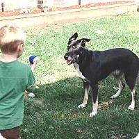 Adopt A Pet :: Ace - Pleasant Grove, CA