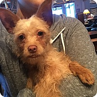 Adopt A Pet :: Mort (FORT COLLINS) - Fort Collins, CO