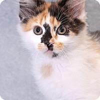 Adopt A Pet :: Hillary - Encinitas, CA
