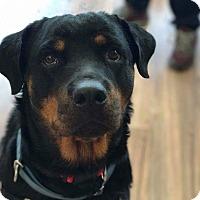 Adopt A Pet :: Rosa - Florence, KY