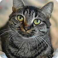 Adopt A Pet :: Nona Lee - Aiken, SC