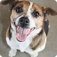 Adopt A Pet :: Freddy - Stilwell, OK