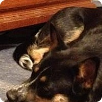 Adopt A Pet :: Esme - Justin, TX
