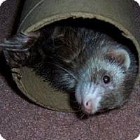 Adopt A Pet :: Amzie - Ville Platte, LA