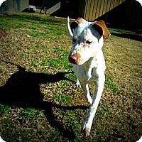 Adopt A Pet :: Pinta - Gadsden, AL