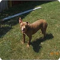Adopt A Pet :: Rose - Killen, AL