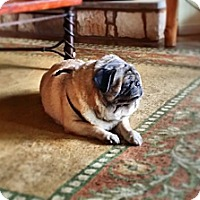 Adopt A Pet :: Barkley - Austin, TX
