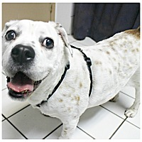 Adopt A Pet :: Chester - Forked River, NJ