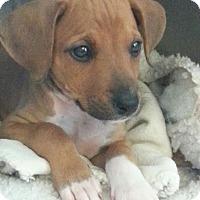 Adopt A Pet :: Luna - Vancouver, BC