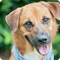 Adopt A Pet :: Charlie - Kingwood, TX