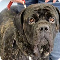 Adopt A Pet :: KAIN - Oswego, IL