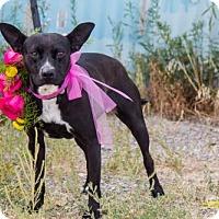 Adopt A Pet :: Sena - Salt Lake City, UT