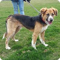 Adopt A Pet :: George - Lisbon, OH