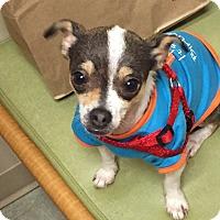 Adopt A Pet :: Hope - San Francisco, CA