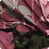 Adopt A Pet :: Opal - Davison, MI