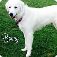 Adopt A Pet :: Bonny - Kyle, TX
