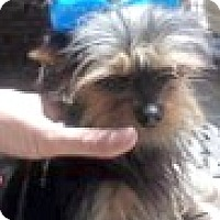 Adopt A Pet :: Chloe-ADOPTION PENDING - Boulder, CO