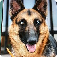 Adopt A Pet :: GYPSY VON GASTWORT - Los Angeles, CA