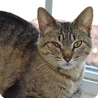 Adopt A Pet :: Sweet Pea - Larned, KS