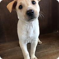 Adopt A Pet :: Chastity - Fredericksburg, TX
