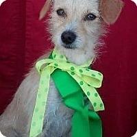 Adopt A Pet :: GUS - pasadena, CA