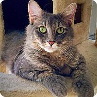 Adopt A Pet :: Simon - West Des Moines, IA