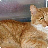 Adopt A Pet :: Shuba - Wildomar, CA
