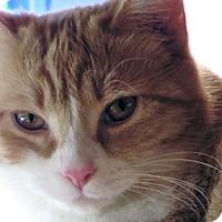 Adopt A Pet :: Alayna - Mississauga, Ontario, ON