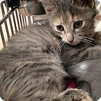 Adopt A Pet :: Poppy - Covington, KY