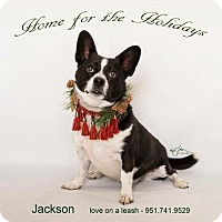 Adopt A Pet :: Jackson - Lake Forest, CA