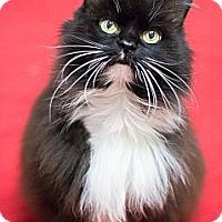 Adopt A Pet :: Zuzu - Chicago, IL