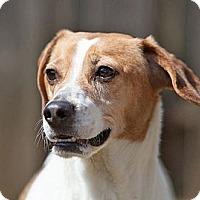 Adopt A Pet :: Baxter - Rockaway, NJ