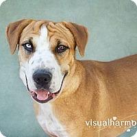 Adopt A Pet :: Khloe - Phoenix, AZ