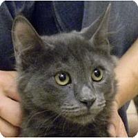 Adopt A Pet :: Davey - Naples, FL
