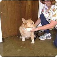 Adopt A Pet :: Oscar - Inola, OK