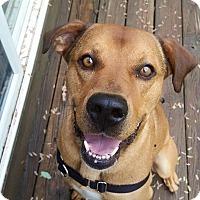 Adopt A Pet :: Charlie - Lebanon, ME