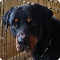 Adopt A Pet :: Rock - Frederick, PA