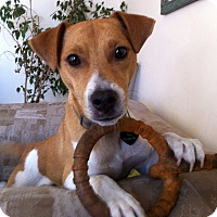 Adopt A Pet :: Kobe - San Francisco, CA