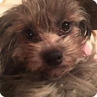 Adopt A Pet :: Sophia adoption pending - Manchester, CT