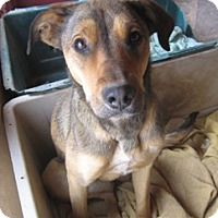 Shepherd (Unknown Type)/Hound (Unknown Type) Mix Dog for adoption in Santa Fe, New Mexico - Pace