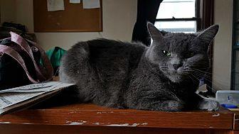 Domestic Mediumhair Cat for adoption in Battle Creek, Michigan - Tourmilina