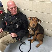 Adopt A Pet :: Meatball - Elyria, OH